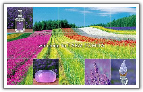 【2013‧北海道親子遊】(25)。Day 6。富良野。富田農場。我終於看到花海了!