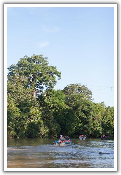 【2015‧沙巴山打根】(06)。Day 2。京那巴當岸河遊船探險 (第一回。續篇)