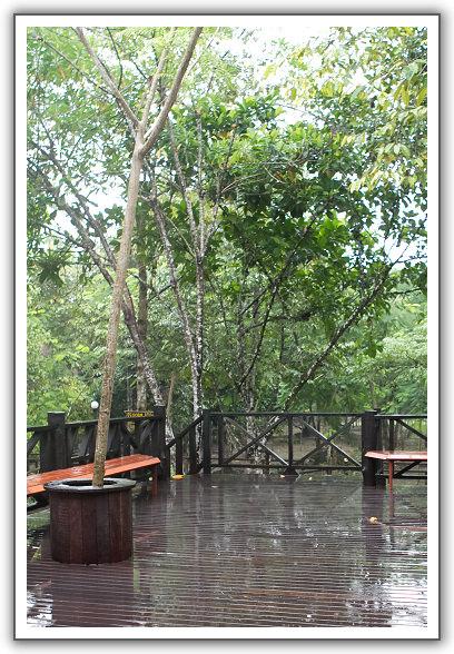 【2015‧沙巴山打根】(09)。Day 4。來去西靈岸(Pulau Selingan)海龜島住一晚 (上)