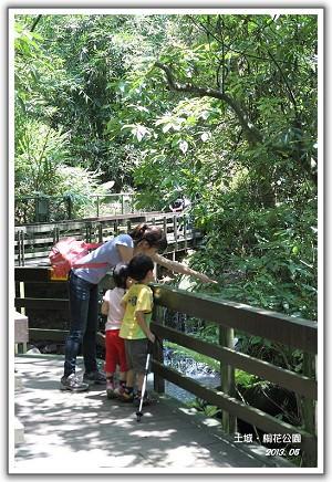 【瘋台灣】(44)102年05月 台北‧土城桐花公園