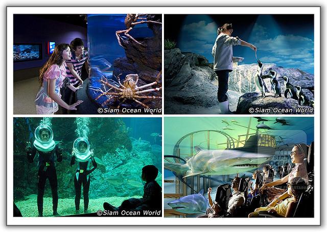 【2011‧泰國親子遊】(20)‧Day 10 。暹羅海洋世界‧中國城