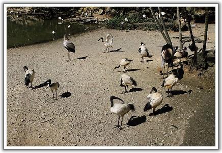 【2012‧沖繩親子遊】(08)‧Day 2。名護自然動植物園、YUGAF INN 飯店